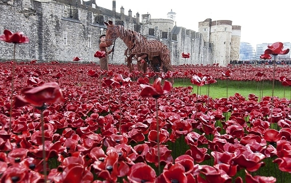 war horse poppies in the moat